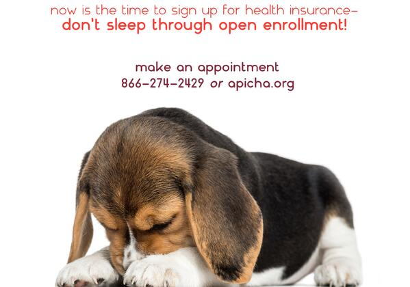 Sleeping Beagle Puppy banner.jpg