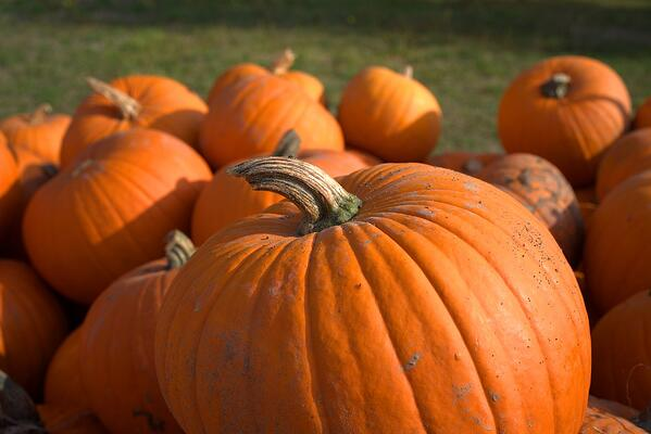 pumpkin-3738398_1280